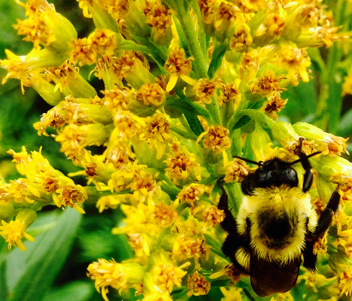 Honeycomb – by BIBIHAMBLIN