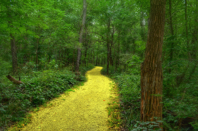 Follow 'Da' Yellow Brick Road (Oh My) by Renee' Drummond-Brown